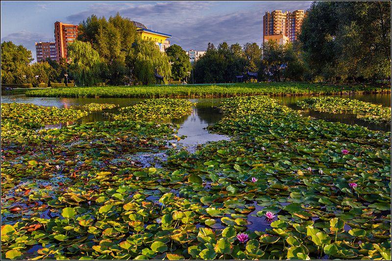 одинцово, вечер,пруд, цветы *  *  *photo preview