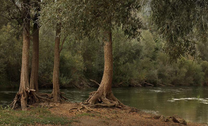 малые реки россии, речка бирь Около речки Бирьphoto preview