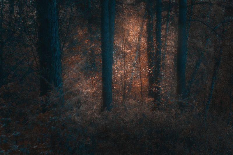 природа, лес,  осень, пейзаж, листва Свет в темном лесуphoto preview