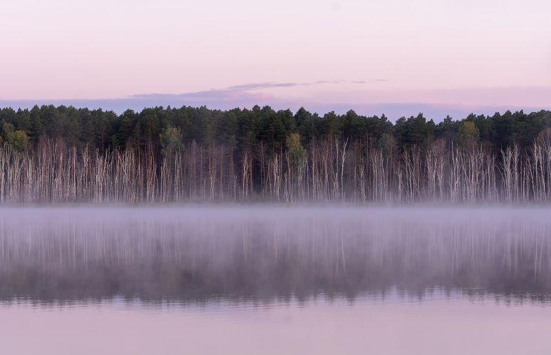 озеро линёво, лес, тайга, птицы, ёжик, На  озере Линёво.. (5 озёр)photo preview