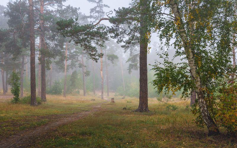 лес, осень, сентябрь, туман Когда в лесу и тишь , и благодатьphoto preview