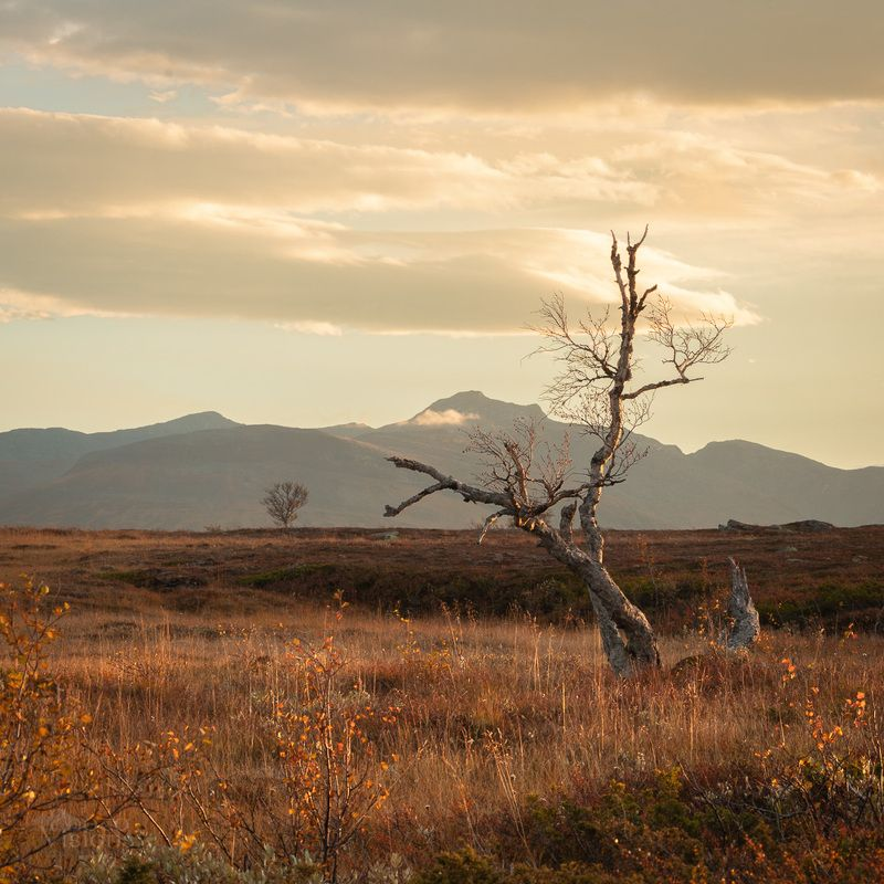 mountains,sylan,autumn,autumnal,norway,norwegian,tree,trees,light,morning The Broken фото превью