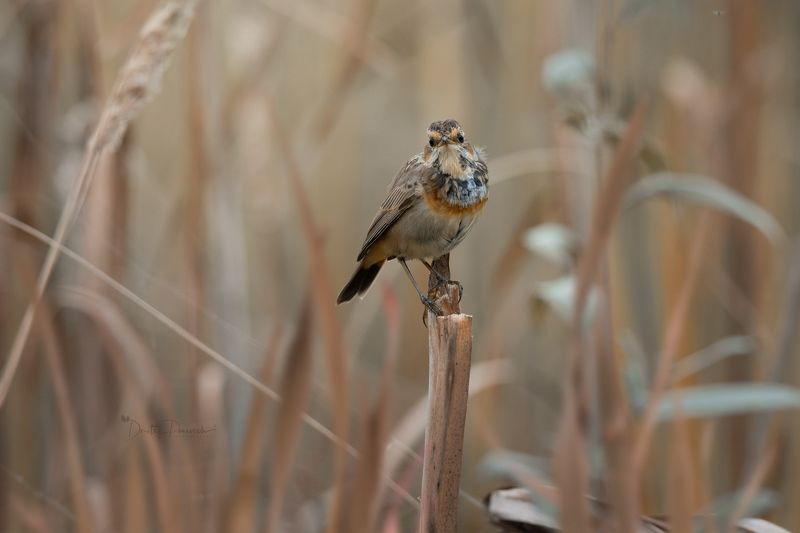 природа, лес, поля, огороды, животные, птицы, макро Юношаphoto preview