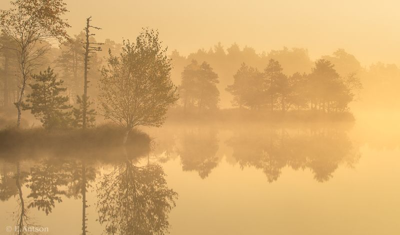 пейзаж, природа, болото, эстония Болото, царство тишины и тумановphoto preview