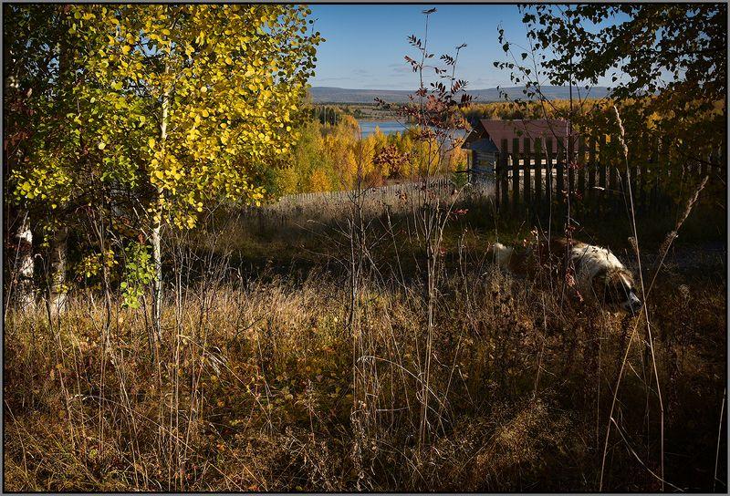 Осенние прогулки...photo preview
