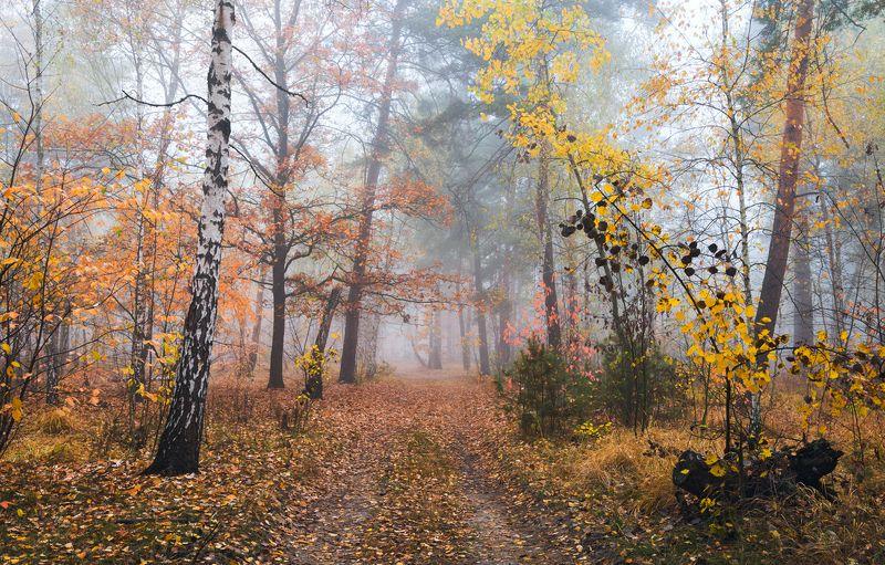 лес осень октябрь утро туман Шуршат под ногами опавшие листьяphoto preview
