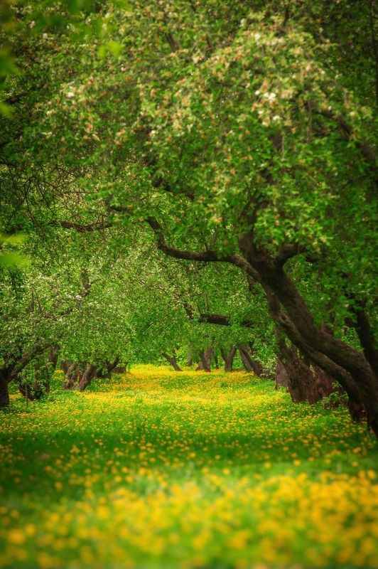 пейзаж, природа, nature, landscape ***photo preview