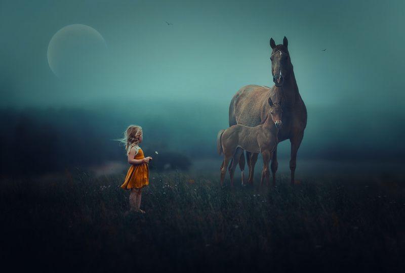 поле, туман, девочка, лошади На рассвете...photo preview