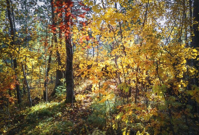 Осенние краски лесаphoto preview