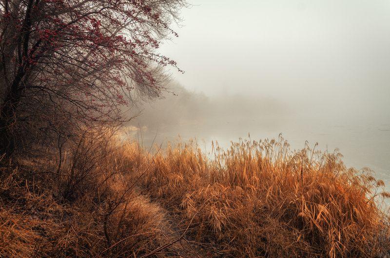 Туманной тропойphoto preview