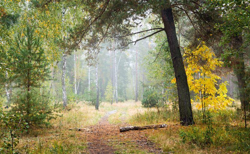 лес осень сентябрь Уходило тихо летоphoto preview