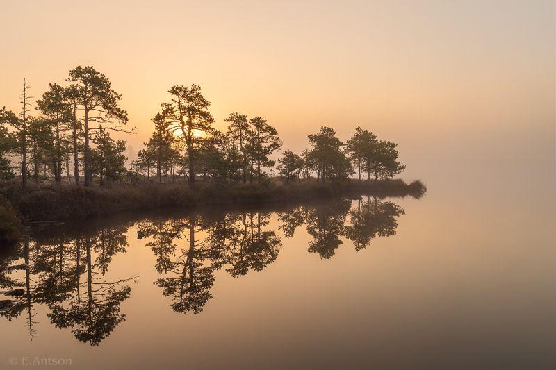 пейзаж, природа, болото, эстония Затерянные в туманеphoto preview