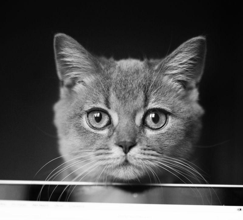 Портрет молодого кота фото превью