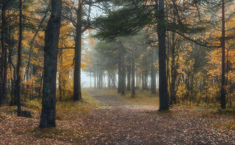осень сентябрь утро туман лес дорога тишина кусты деревья сосны листья опавшие Пора осеннего туманаphoto preview