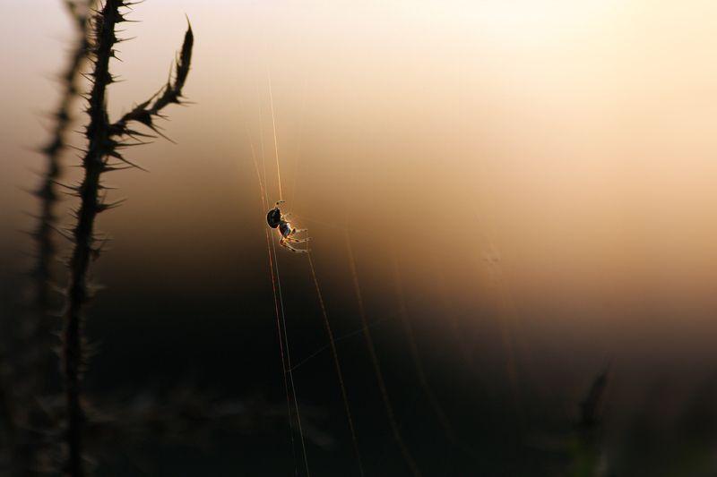 лето,  август,  вечер,  закат,  паучок,  паутинка,  на лугу,  около речки бирь Провожая солнышко...photo preview