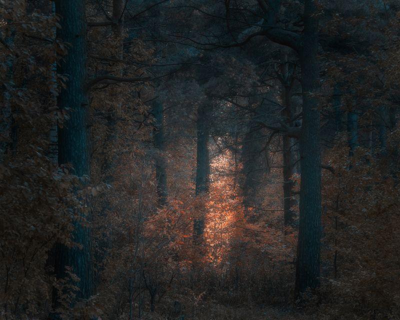 лес, природа, осень, свет, пейзаж Темный осенний лесphoto preview