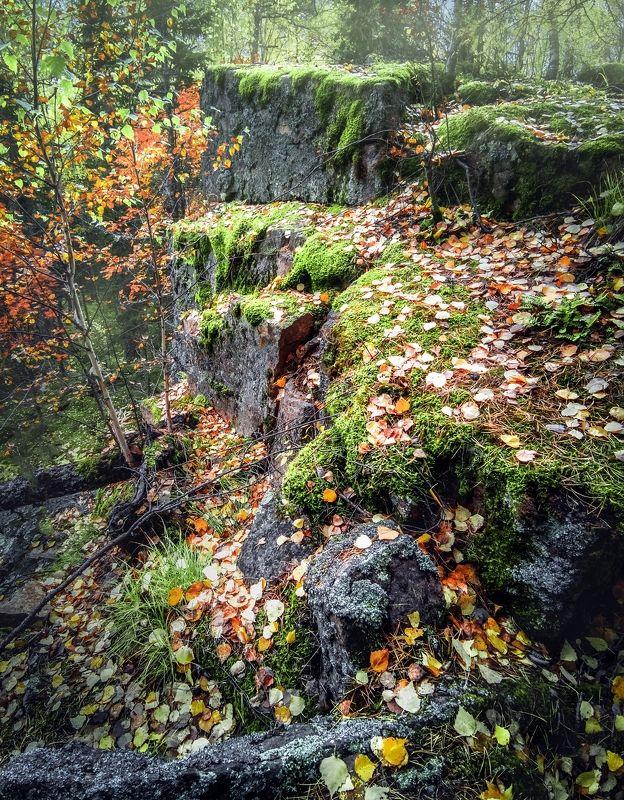 Ступеньки в лесную сказкуphoto preview