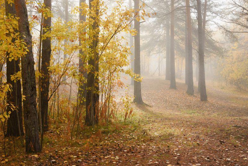 осень сентябрь утро туман лес тишина кусты деревья сосны осины листья Пробивается солнцеphoto preview