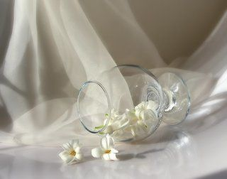 Какая тишина и радость в белом цвете...