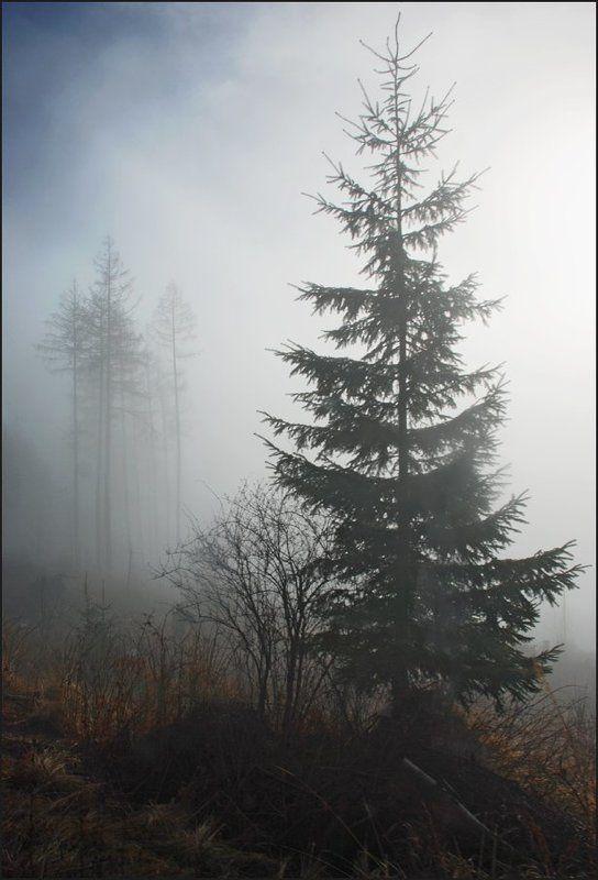 Туманная серия 2(5)photo preview