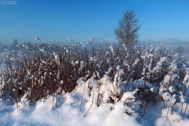 Blue, Daylight, Estonia, Frost, Jevgeni, Kurnikov, Light, Season, Sun, Winter Туманно Морозный зимний деньphoto preview