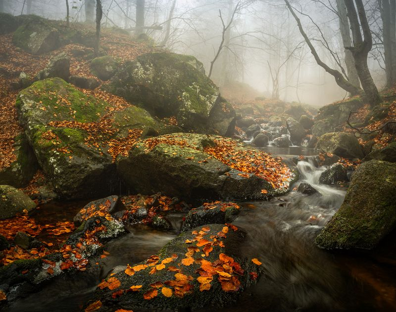landscape nature scenery forest wood autumn mist misty fog foggy river waterfall colors mountain vitosha bulgaria туман лес Autumn foursphoto preview