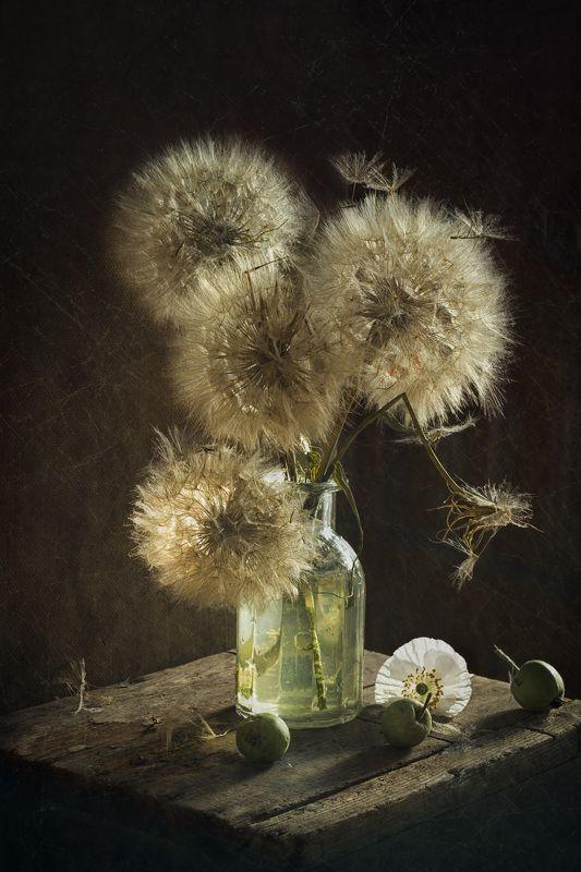 одуванчики, солнечный свет, натюрморт Одуваныphoto preview