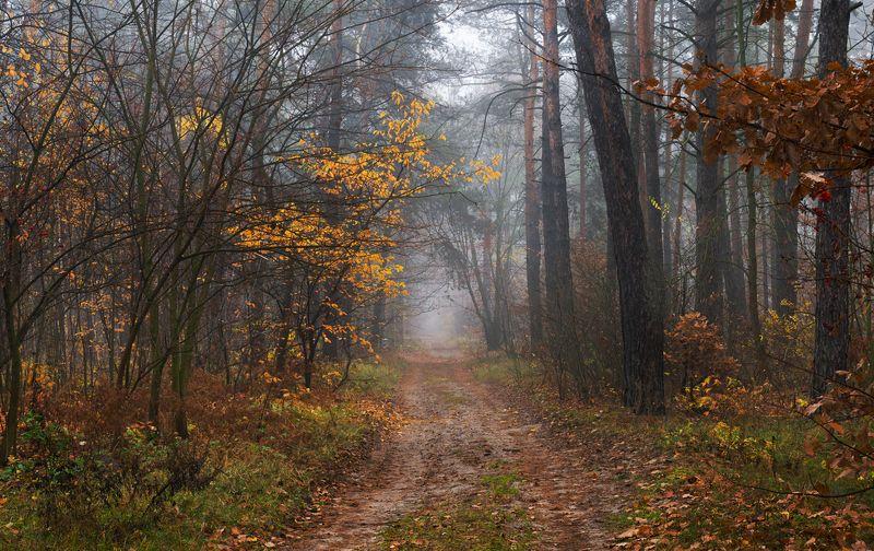 лес осень ноябрь поздняя туман Пустеет воздух, птиц не слышно боле...photo preview