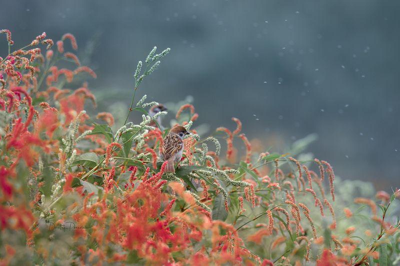 природа, лес, поля, огороды, животные, птицы, макро Осенний салютphoto preview