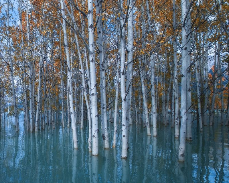 abraham, lake, rockies, aspen, trees, sky, water ДЕРЖАТЬСЯphoto preview