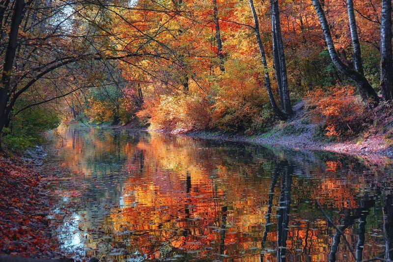 осень Осенняя палитраphoto preview