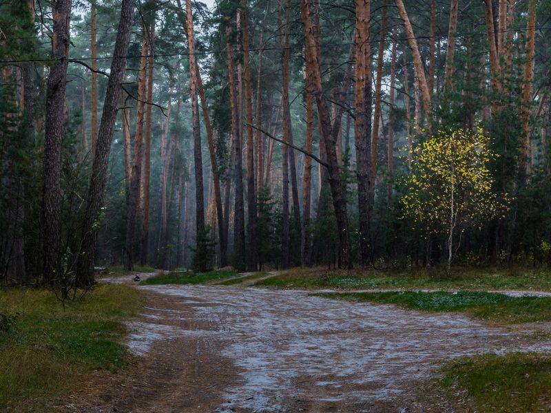 сосны, осень, пороша, пейзаж. лес, дорога Задумчивыйphoto preview