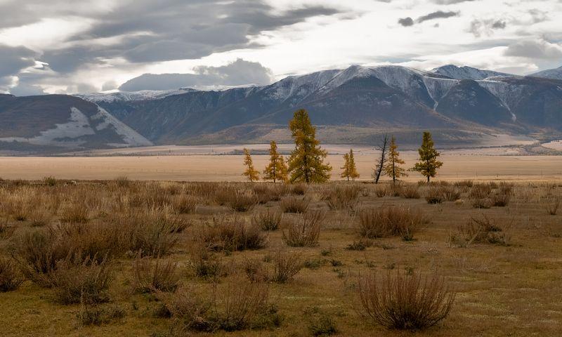 алтай, курайская степь., непогода., Алтайская осень.photo preview