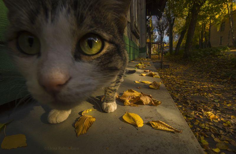 кострома, город, кот, улица, осень Осень в городеphoto preview