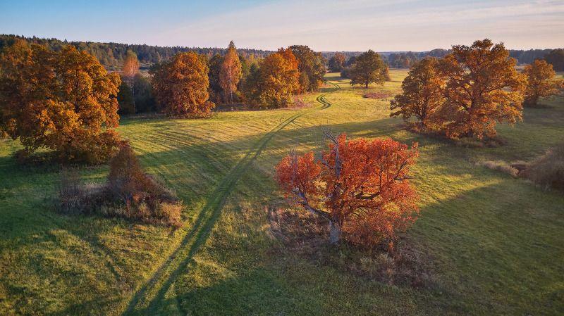 беларусь, вечер, дорога, дубрава, закат, луга, октябрь, осень, поля, свислочь Вечер в осенней дубравеphoto preview
