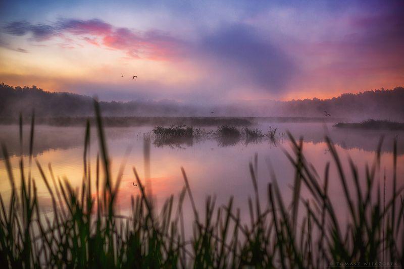 landscape, poland, light, summer, awesome, amazing, sunrise, sunset, lovely, nature, travel, forest, pond, lake, light, colors, silence Silence фото превью
