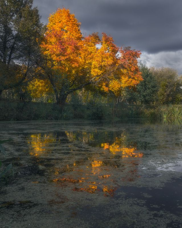 отражение, осень, Московская область, природа, Россия, пейзаж Отражение осениphoto preview