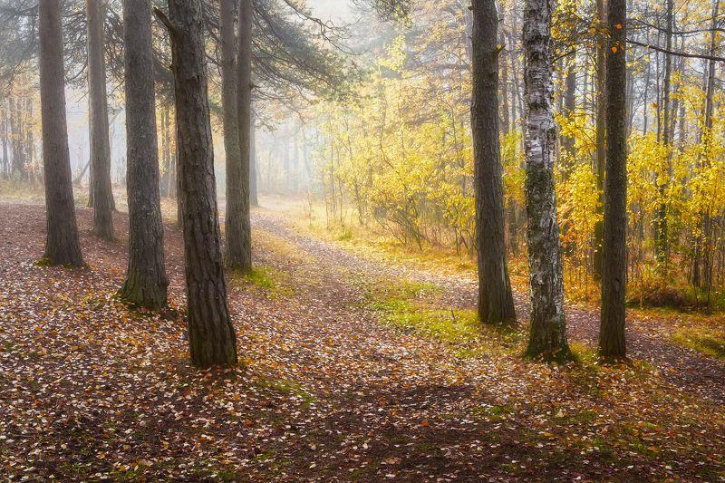 осень сентябрь утро лес туман тишина кусты деревья листья тропки Туманные тропкиphoto preview