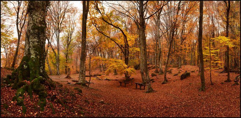 Осень на Андрюхиной полянеphoto preview