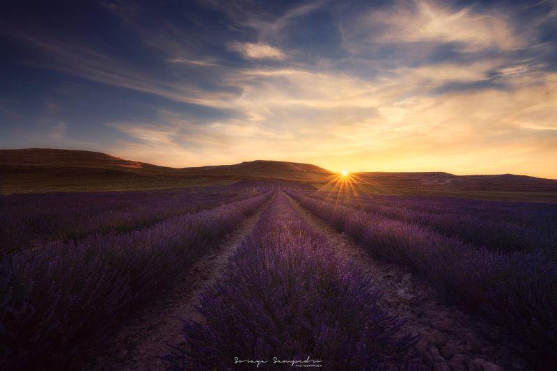 #sunset, #fields, #cloudy, #sun, #sunstar, #purple, #smell, #spain, #lavender LAVENDERSphoto preview