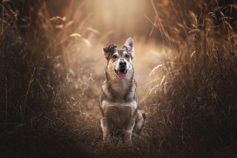 собака, животное Уокерphoto preview