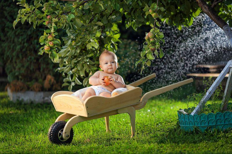 малыш, тележка, карета, ушат, зелень, газон, яблоня, ребёнок, сад, природа, вода Внук Ми- Мишкаphoto preview