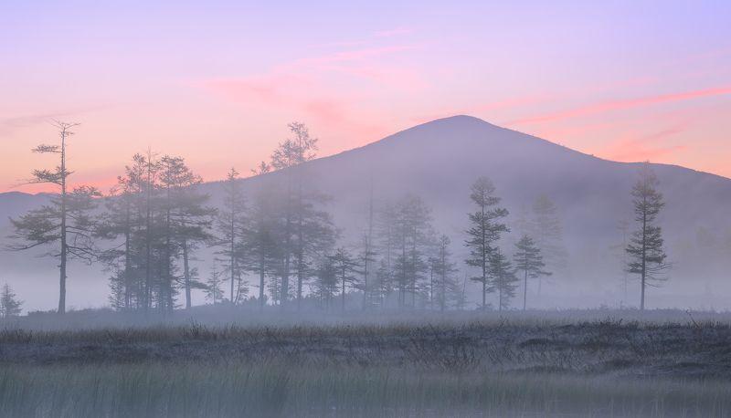 озеро Джека Лондона Утро на болоте...photo preview