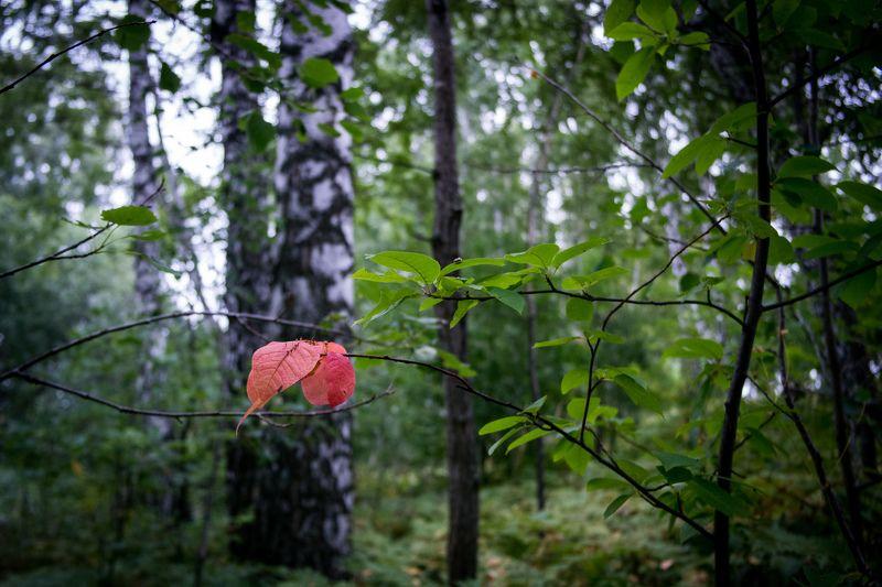 Осенний индикатор фото превью