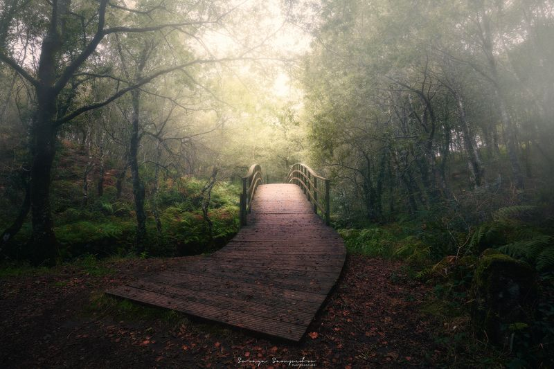 #river #bridge #foggy #wood #humidity #intothewood#autumn #red the bridgephoto preview