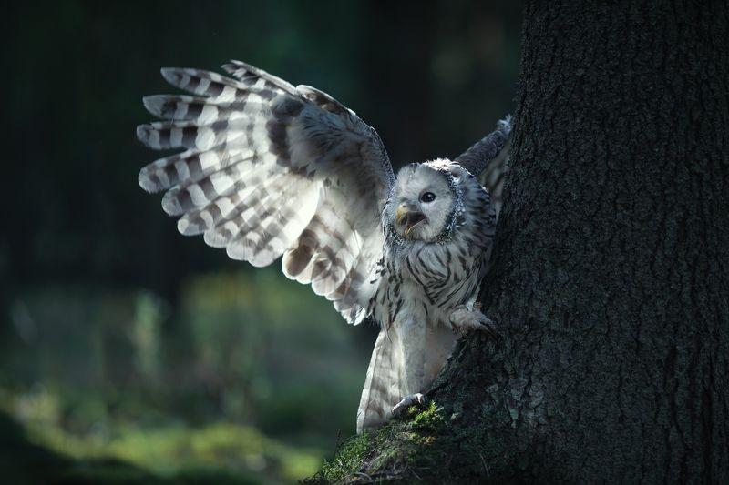 Качну серебряным тебе крылом. фото превью