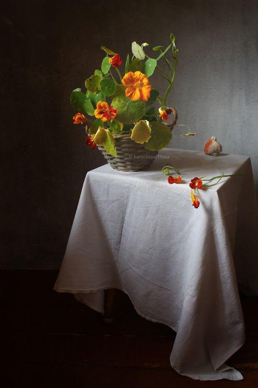 натюрморт, цветы, настурция Настурцияphoto preview