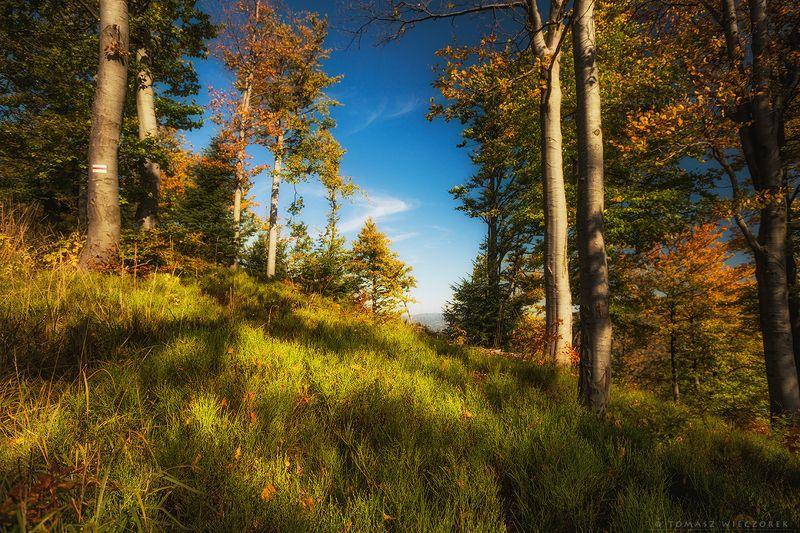 landscape, poland, light, autumn, awesome, amazing, sunrise, sunset, lovely, nature, travel, forest, trees, light, mountains Autumn colors фото превью