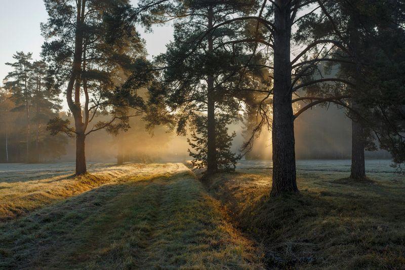 питер, павловск, павловскийпарк, павлаоский, пейзаж Дыхание октября. . .photo preview