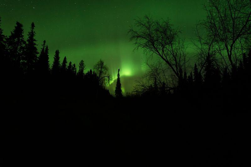 печора, северное сияние, коми Сияние в ночиphoto preview